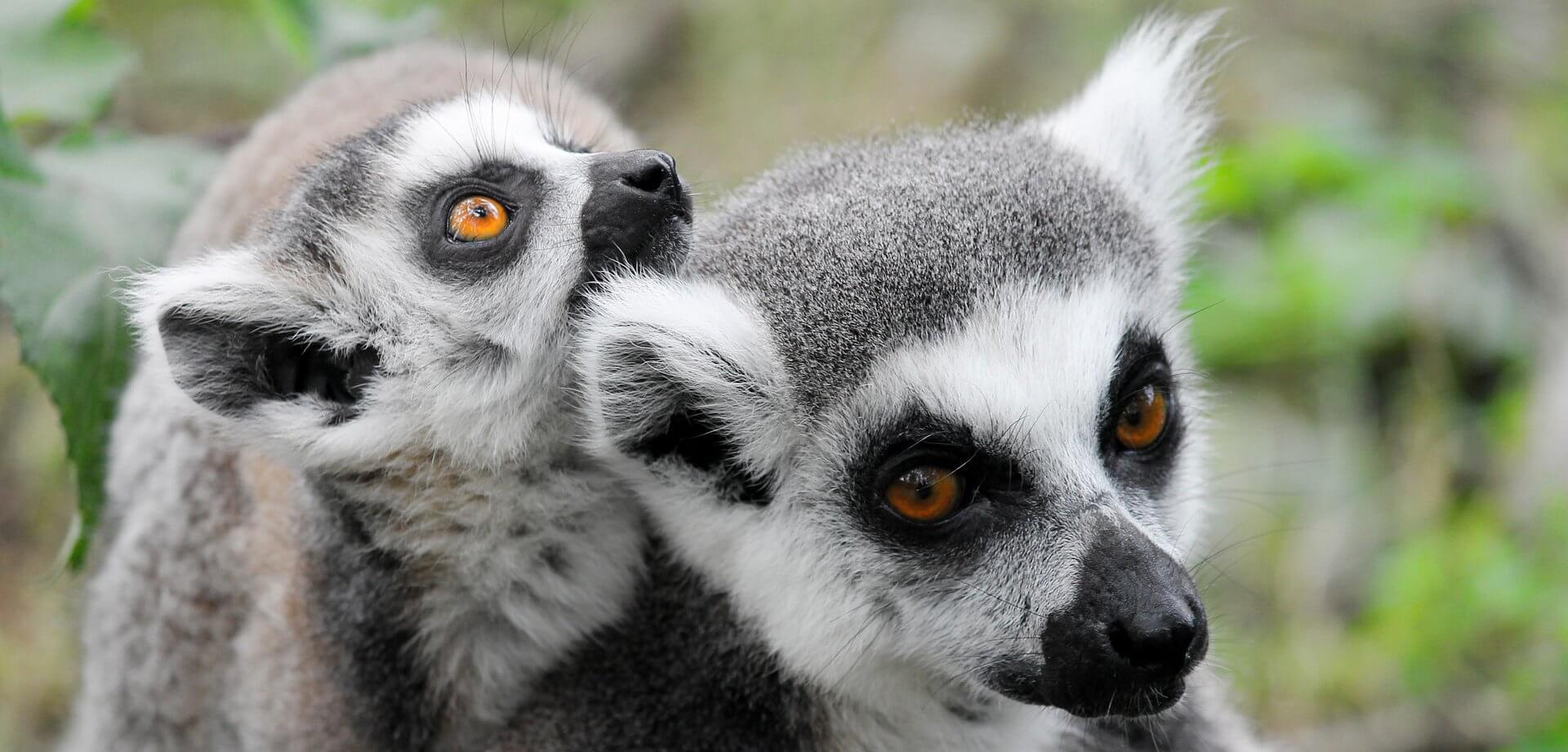 Madagascar - Country
